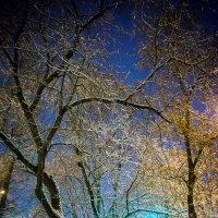 Кружева зимы :: Игорь Герман