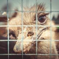 Человек создан для счастья, как страус для полета. :: Юлия Волынец