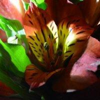 От любимого брата самые лучшие цветы :: Nastasia Nikitina