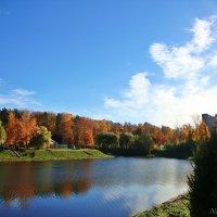 Многообразие красок осени :: Лидия (naum.lidiya)