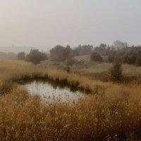 Родниковое озерцо... :: евгения