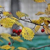 Просто осень 2 :: Ирина Белая