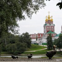 Ново-девичий монастырь. :: Larisa Ereshchenko