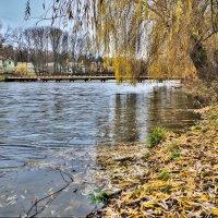опавшие листья.. :: юрий иванов