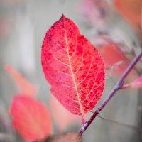 Осень - краса! :: Юлия