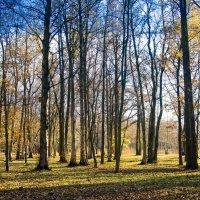 Осенний парк :: Виталий
