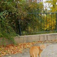 Рыжий кот в осеннем парке :: Сергей Босов