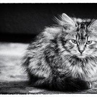 холодно............ :: Елена Лабанова