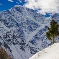 Горы и дерево :: Aleksey Donskov