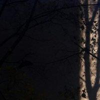 ускользающая тень :: Елена Логинова