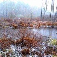 болото под первым снегом :: Александр Прокудин