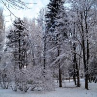 Зимняя сказка в ноябре. :: Larisa Ereshchenko