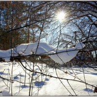 Солнечный денек :: Андрей Заломленков