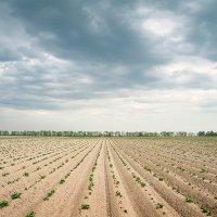Весеннее поле. :: Андрий Майковский