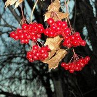 Осенние рубины. :: nadyasilyuk Вознюк