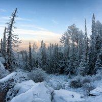 Замороженный лес :: Александр Решетников