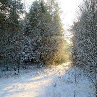 Солнечная дорога в лесу. :: Михаил Попов