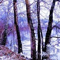 Краски ноября :: Светлана Игнатьева