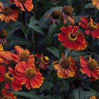 Домашние цветы :: Александр Архипов