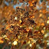 Цветы ноября :: Милешкин Владимир Алексеевич