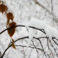 Ноябрь...  белым-бело..!!!)... :: Валерия  Полещикова