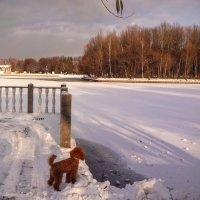 Найджел потерял уток. :: Larisa Ereshchenko