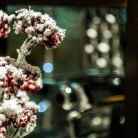 Новогодняя витрина :: Елена Селина