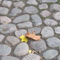 Осень в Петербурге. :: Маера Урусова