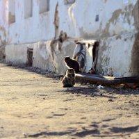 Вечерние коты :: Анна Куценко