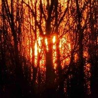 Солнце вечером садится за деревья и кусты. :: Владимир Гилясев
