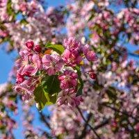 Apple tree :: Марк Додонов