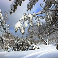По первому снежку :: Елена ))