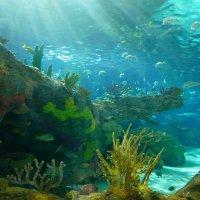 Подводный мир ... :: Юрий Поляков
