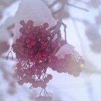 В снежной шапочке :: cfysx