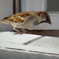вхожий в дом) :: linnud