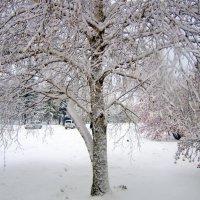 Пришла зима . :: Мила Бовкун