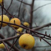 Осенние яблоки :: Александр Богданов