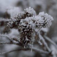 Украшения зимы :: Андрей Михайлин