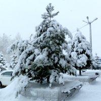 Снег в городе. :: Прима Игорь Кондратьевич