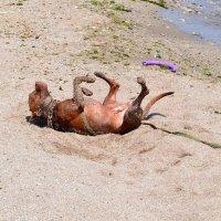 Песочные ванны :: Виктор Шандыбин