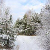 И к нам пришла зима !!!!!! :: Hаталья Беклова
