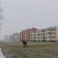 Падал первый робкий снег :: Анатолий Клепешнёв