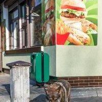 Гамбургеры, хот-ДОГИ.... :: Игорь Вишняков
