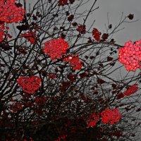 Прощальный букет ноября.... :: Galina Dzubina
