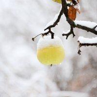 Предверие зимы... :: Михаил Болдырев