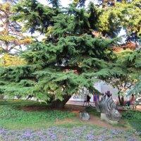 Рыбки под деревом :: Вера Щукина