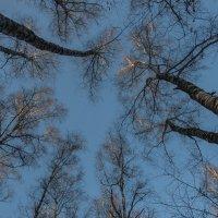 Взгляд в небеса :: marmorozov Морозова