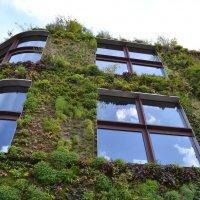Париж, зеленая стена :: Lüdmila Bosova