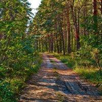 В лесу :: Александр Петрученко