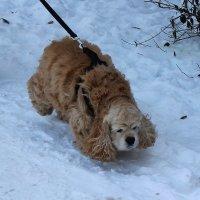Подметаем снег ушами :: Светлана